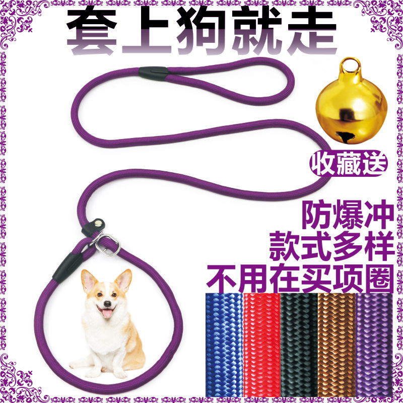 Puppy Dog Hand Holding Rope P Word Chain Tied Dog P Tibby Small Medium Large Dog Thai Rope Bear Pomeranian Golden Retriever