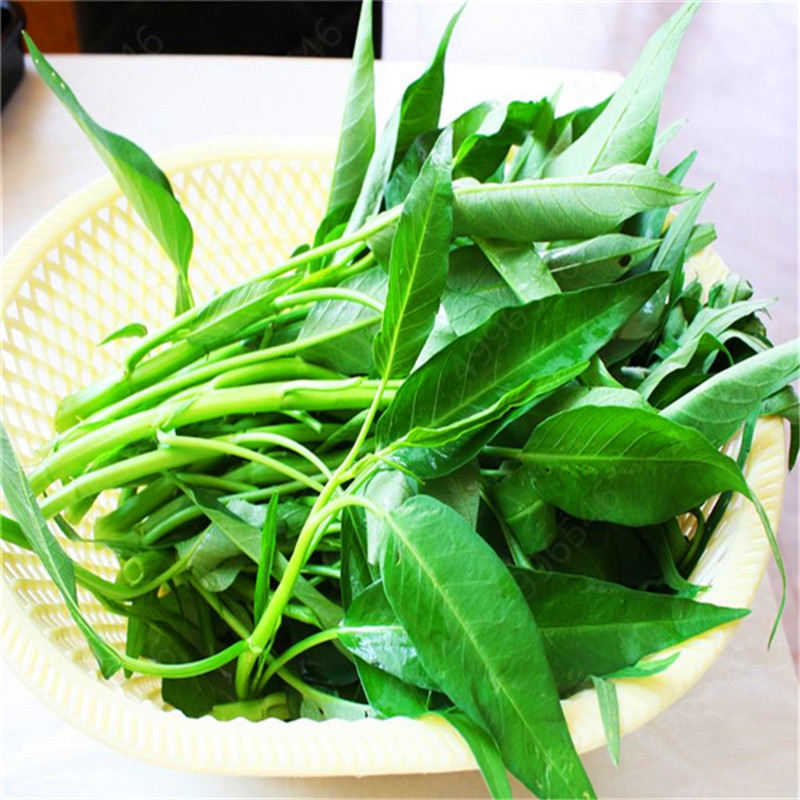 100 Pcs Water Spinach Vegetable Bonsai Kangkong, River Spinach, Chinese Spinach Or Watercress Easy-growing
