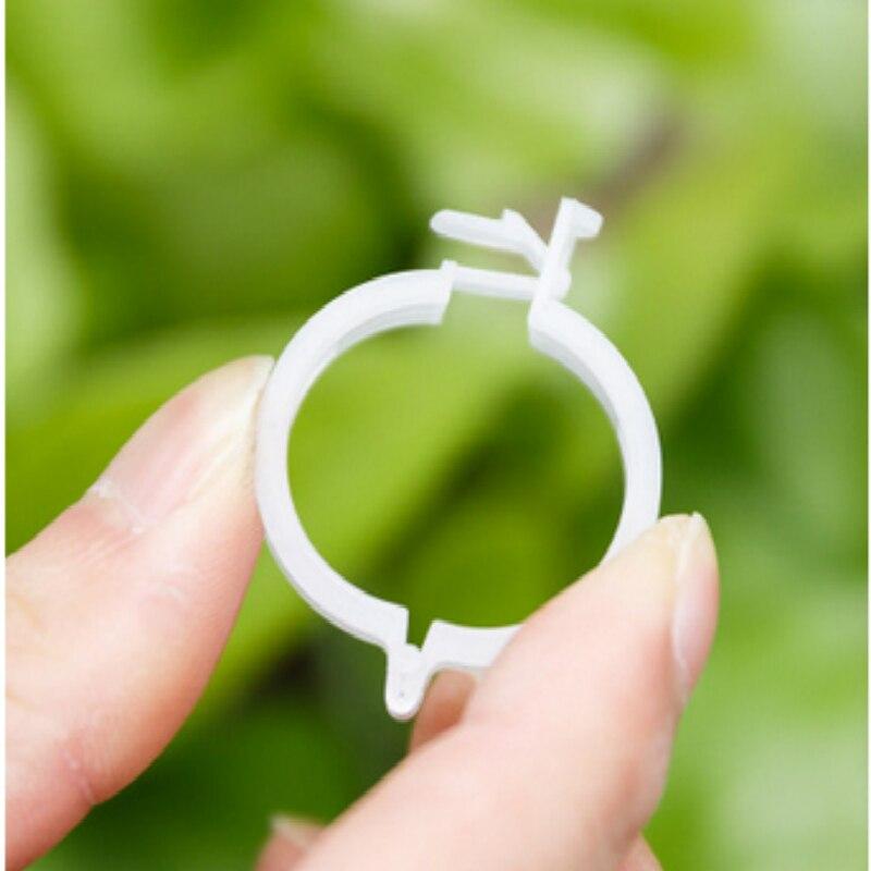 100 шт. растительные лозы томатные зажимы для стержня поддерживает подключение к Треллис скобы для ветвей пластиковые зажимы для строп крепеж лозы растений