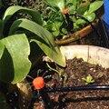 40 м автоматическая система капельного орошения набор таймер микро разбрызгиватель сад полив для семейного полива  балкон сад охлаждения