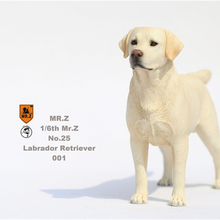 Mr.Z Studio 1:6 Labrador Retriever Loyal Dog Pet Figure Animal Decor Model Toy Kid Gift Play Peripheral Ornaments Decoration