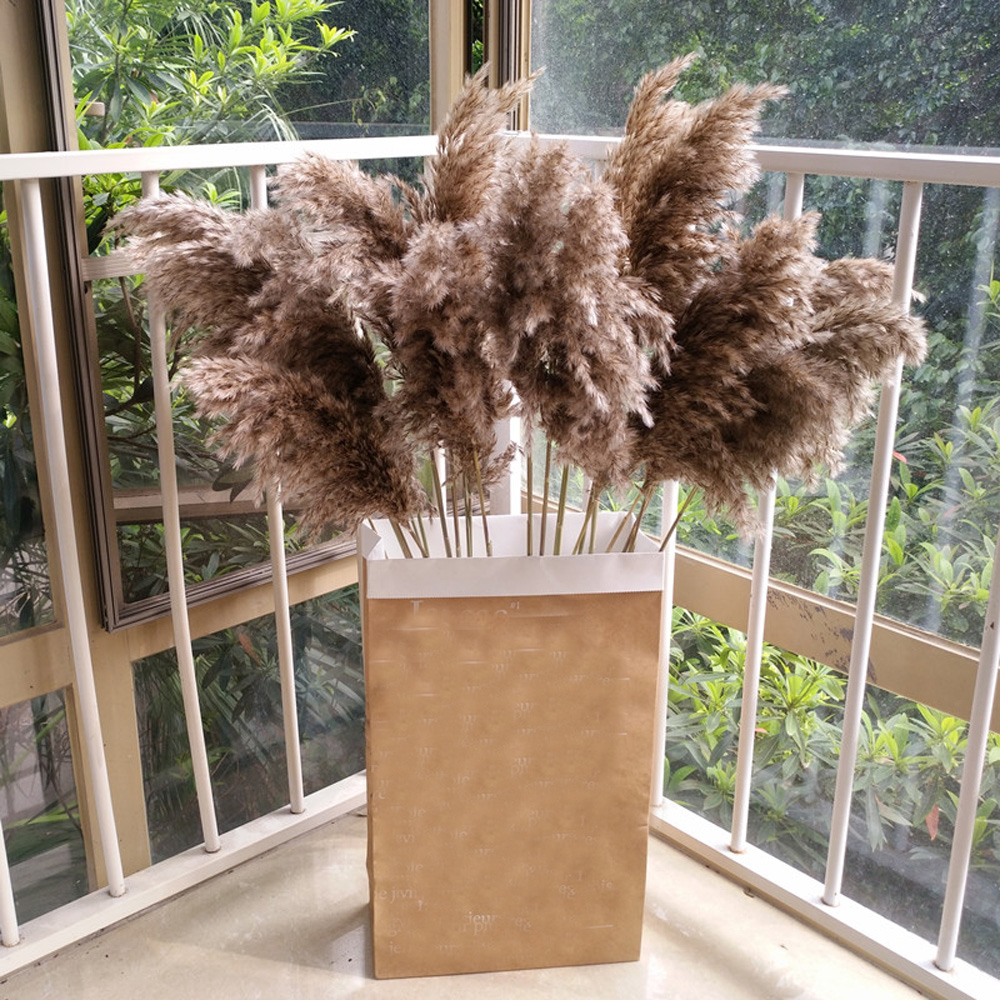 Dried-Plants Pampas-Grass Wedding-Flower Bunch Natural 20pcs Communis Raw-Color Phragmites title=
