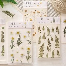 Natural daisy clover sakura gypsophila japonês álbum de fotos mão conta transparente animal de estimação folha de flor planta decoração adesivo