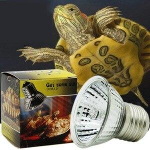 Full Spectrum Reptile Lamp Liz