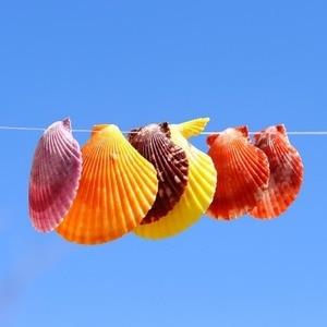 NEW Hole Natural Starfish Seashell Beach Craft Natural Sea Stars DIY Beach Wedding Decoration Shells for Jewelry Making
