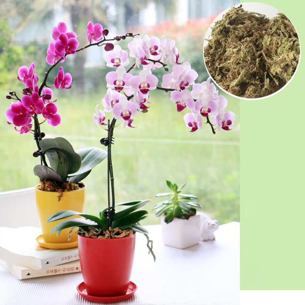 Water Moss Dry Moss Phalaenopsis Orchids Soilless Cultivation Substrate Soil 12L Compressed Pack