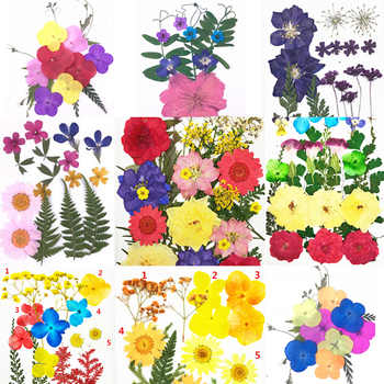 Pressed Flower Mixed Organic Natural Dried Flowers DIY Art Floral Decors Collection Gift Best Price