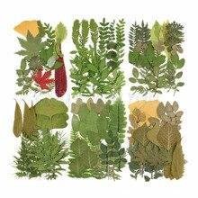 Pressionado folha real seca planta sortido folha herbário para diy resina artesanato arte jóias decoração suprimentos transporte da gota