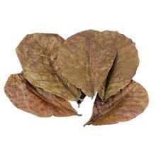 Класс A натуральный терминалия катаппа Foetida листья остров миндаля листьев кристалл креветки улучшить качество воды