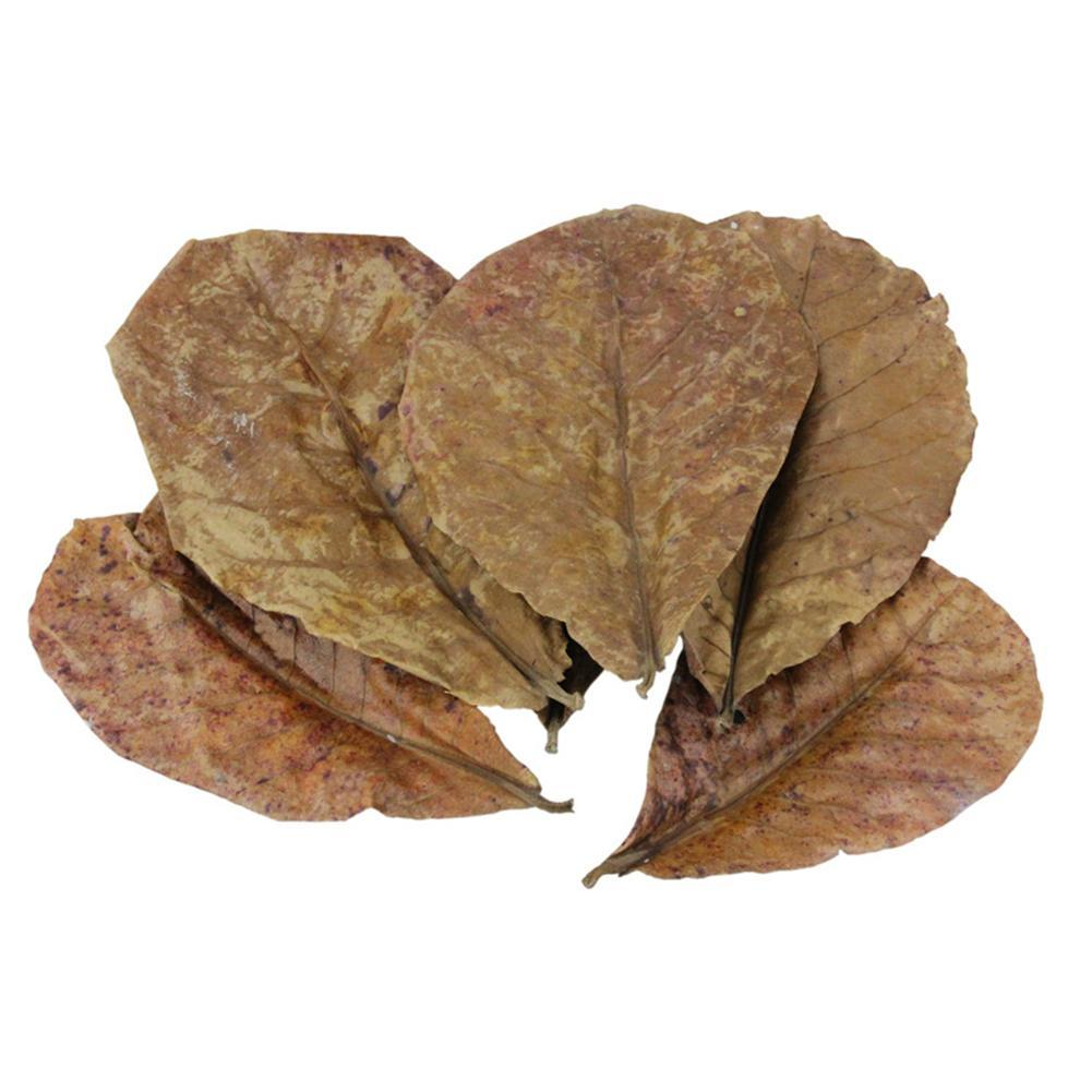 Grade A Natural Terminalia Catappa Foetida Leaves Island Almond Leaf Crystal Shrimp Improve Water Quality