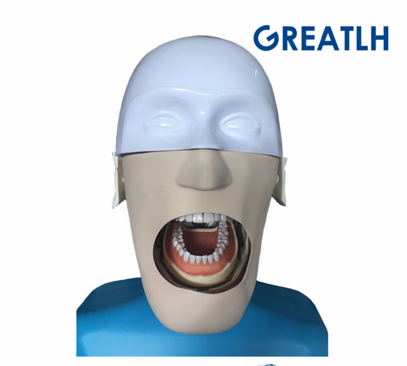 Dental Manikins Phantom Head For Dentistry And Dental Technology Sennior Manikins Phantom Head With Torso