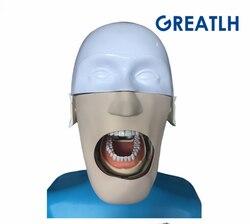 Dental trainingsmodelle Phantom Kopf für zahnmedizin und dental technologie Sennior trainingsmodelle Phantom Kopf mit Torso