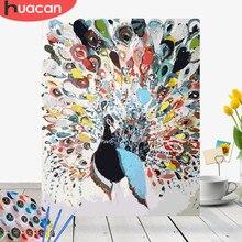 HUACAN – Kit de peinture acrylique par nombres d'animaux paon, sur toile, tableau d'art mural, peint à la main, décoration de maison, cadeau, bricolage