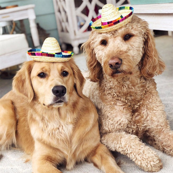 Dog and Cat Mexican Straw Sombrero Hat 1
