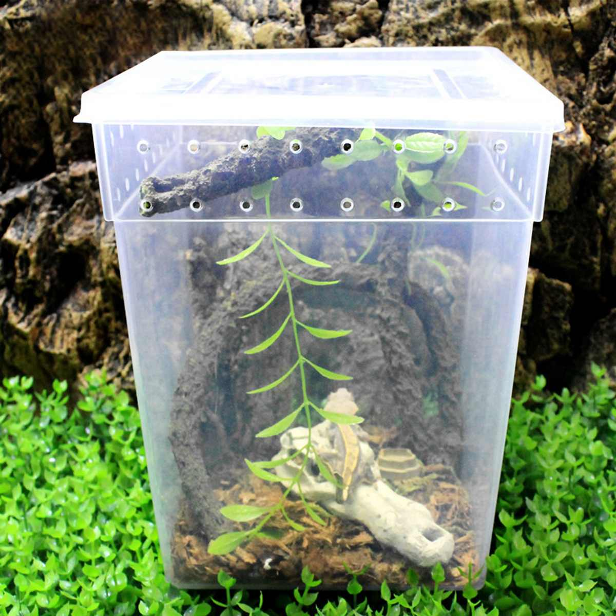 Transparent Plastic Box Insect Reptile Lizard Cage Breeding Cage Feeding  Tub Turtle Tank Reptile Feeding Hatching Container|Terrariums| - AliExpress