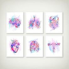 Anatomy Print Anatomical Organs Poster Brain Heart Lungs Liver Pelvis Rib Cage Human Anatomy Art Painting Clinic Wall Art Decor(China)