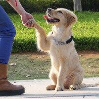 Studded Spiked Leather Dog Collar Harness Leash Set for Pitbull Mastiff Pet Collar LAD sale