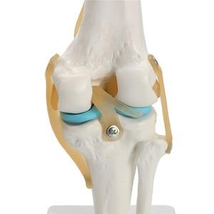 Human anatomy skeleton Life Size Knee Joint Anatomical Model Heart skull brain skull mod el in trauma nursing manikin train(China)