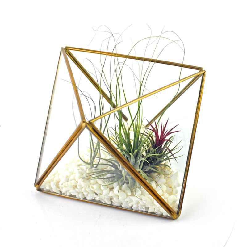 Алмазный ящик для хранения стеклянный террариум дизайн держатель ювелирных изделий Прозрачный граненый суккулент воздушные растения сеялка горшок/Keepsake дисплей лук