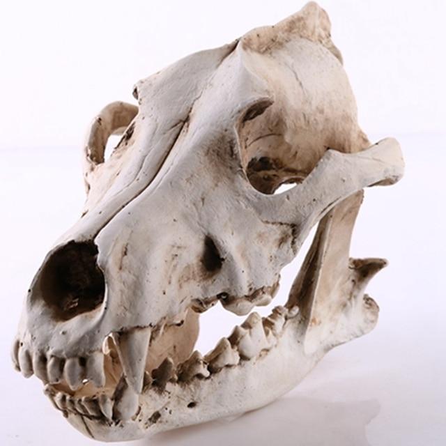 Wolf Skull Sculpture Model Wolf Dog Skeleton Resin Simulation Animal Skull Model Home Office Bar Statue Decor Craft Ornament 1