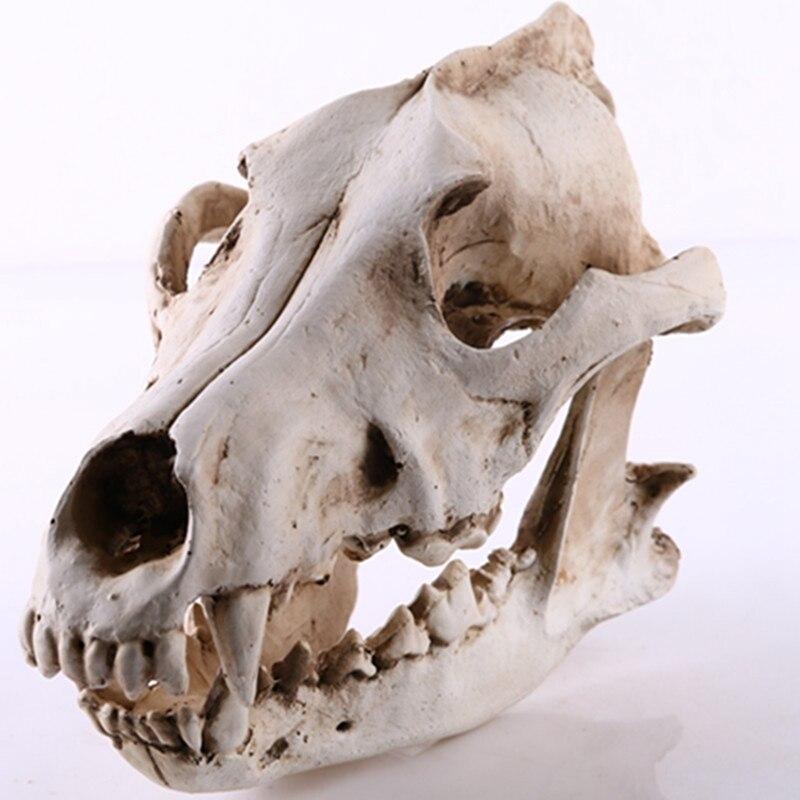 Волк Скульптура черепа модель волк собака Скелет Смола моделирование животное череп модель домашний офис бар декоративная статуэтка ремес...