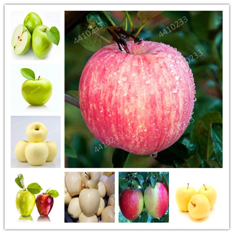 20 pcs/bag Dwarf Apple Bonsai, Miniature Apple Tree, Sweet organic fruit vegetable Bonsai, indoor or outdoor, DIY Home Garden