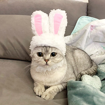 Cat Bunny Headgear Dog Teddy Bichon Transformed Hat Garfield Bunny Ears Pet Headdress Cat Costumes Cat Supplies Pet Products image