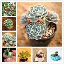 30Pcs Cute Succulent Plants Seeds Bonsai Garden Flower Nature Plants Home Fragrant Colorful Fleshy Lotus Essence Lip Mask LT-3