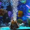 Aquarium Decoration Mini Fish Tank Ornament Simulation Volcanic Bubble Stone Oxygen Pump Aquatic Biological Supplies 1