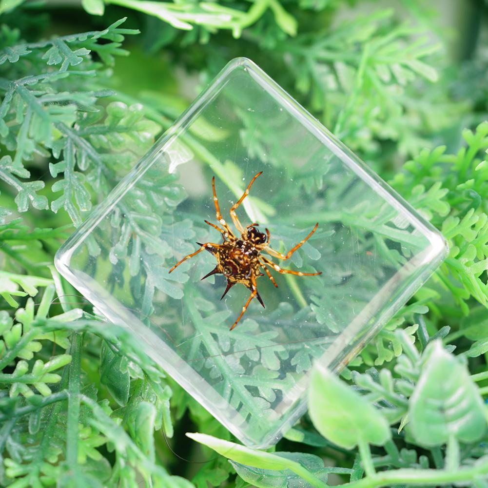 Espécime de inseto figura modelo brinquedos aranhas besouros escorpião resina brinquedos adereços fresco espécime educacional cedo brinquedos para criança d0e6