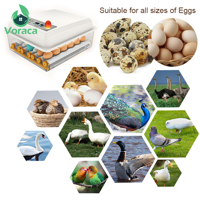 120 Eggs Incubator Brooder Quail Bird Incubator Chick Hatchery Poultry Tool Hatcher Turner Automatic Farm Incubation Tools 4