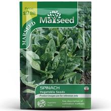 American Heirloom MARSEED Spinach Vegetables Seedsplants Seedling Garden Outdoor