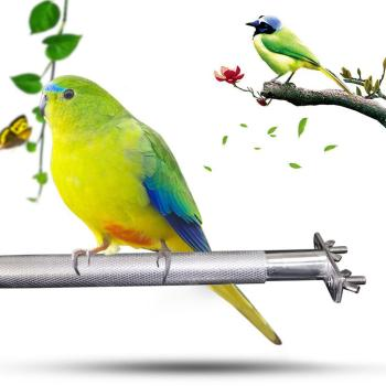Stainless steel Birdcage Stands Bird Perch Parrot Stainless Steel Bird Standing Rod Teether M Bird cage Bird supplies 3