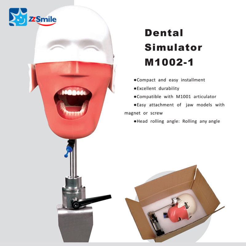 Dental Education Training Simulation Practice Phantom Head