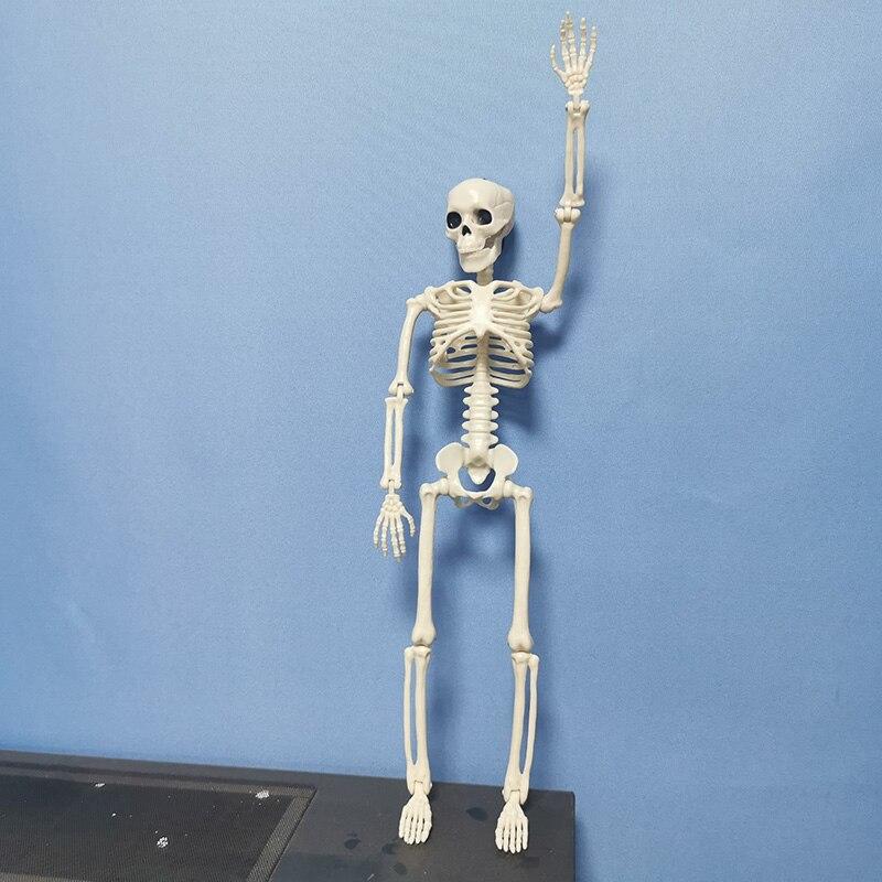 Image 3 - 5 Pcs Human Anatomy Skeleton Skeleton Model Medical Medicine Learning Aid Anatomy 1 Pair Skull Skeleton Hand Bone HalloweenMedical Science   -