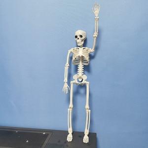 Image 3 - 5 Pcs Human Anatomy Skeleton Skeleton Model Medical Medicine Learning Aid Anatomy 1 Pair Skull Skeleton Hand Bone Halloween