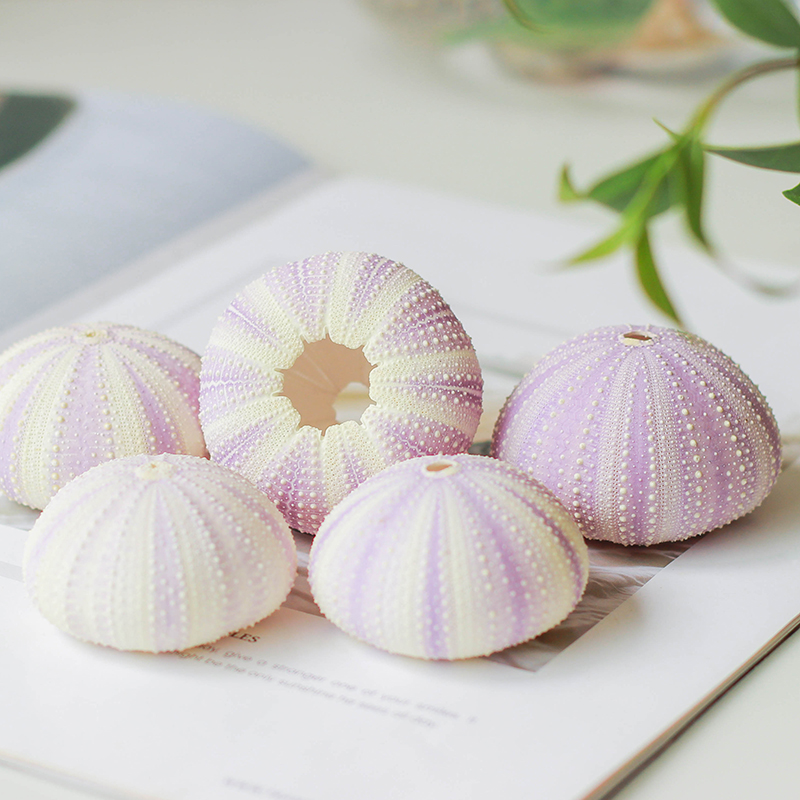 Happy Kiss New   6pcs Natural Dream Purple Sea Urchin Natural Shell Conch Beach Wedding Decoration Coastal Home Crasfts