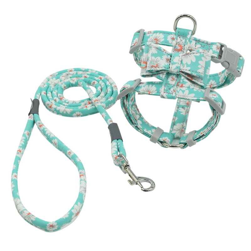 cute boy dog harness