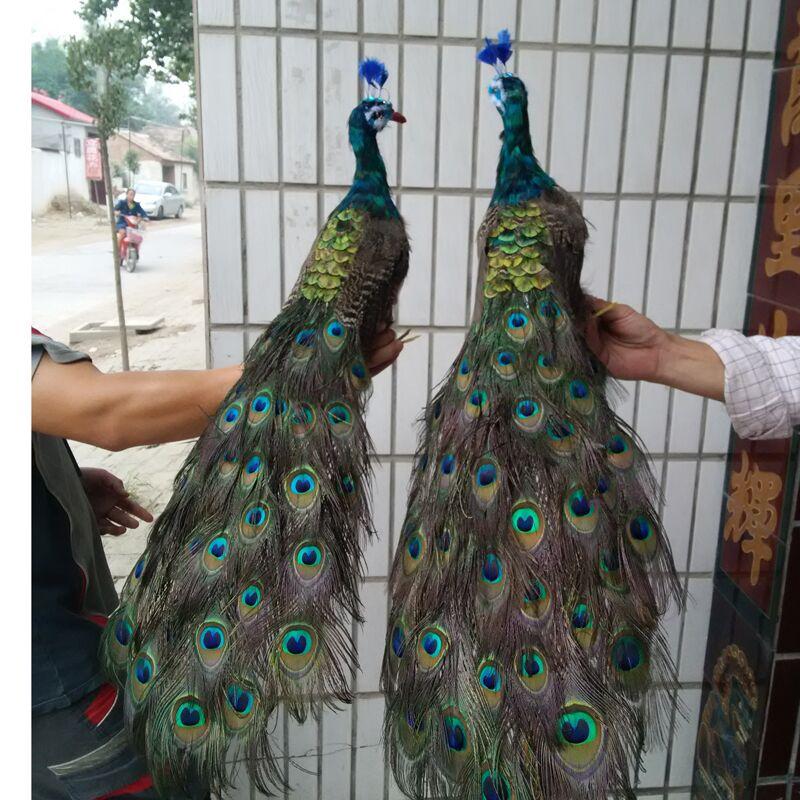 Une paire de modèles de paon de simulation mousse et plume belle poupée de paon environ 100cm