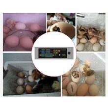 HTMC-5 Egg Incubator Controller Set DIY Mini Incubator Controller Constant Temperature Eggs Incubation Goose Bird Quail Brooder