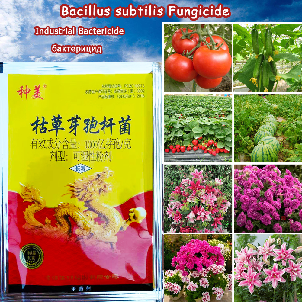 10 G Bacillus Subtilis Treatment Plants Disease Drugs Sterilization Pesticides Fungicides Pharmacy Fertilizer Protecting Garden