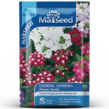 American Heirloom MARSEED Garden Verbena Flower  Seedsplants Seedling Outdoor