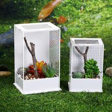 Прозрачная акриловая рептилия миска для кормления малышей ящик для насекомых молящийся мантис рептилия домашняя клетка для насекомых Террариум для рептилий мантис коробка для разведения