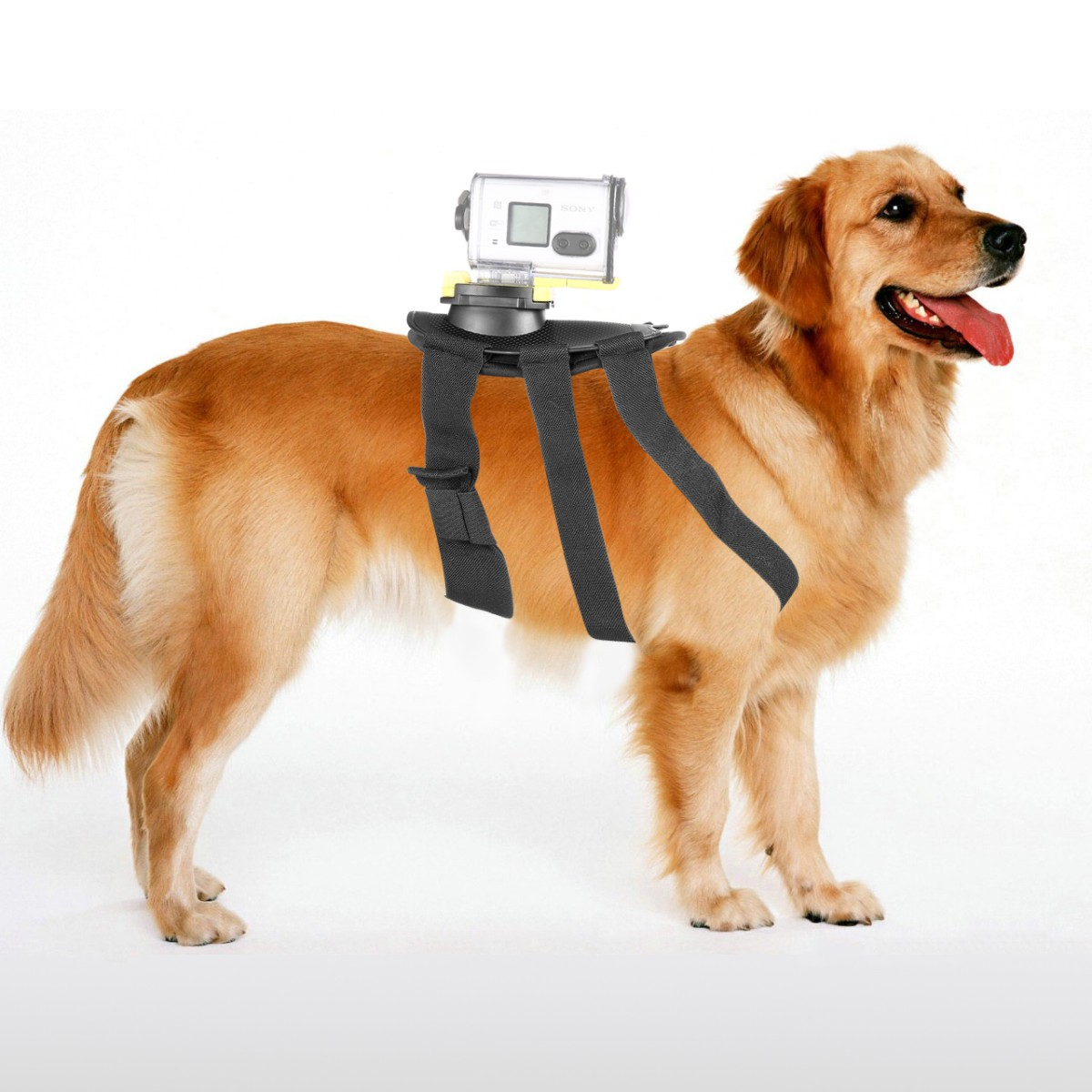 Fetch Dog Chest-Strap Harness Belt for <font><b>Sony</b></font> Action FDR-X3000R <font><b>HDR</b></font>-AS30V <font><b>HDR</b></font>-AS100 <font><b>HDR</b></font> AS50R AS30 <font><b>AS300R</b></font> AS200 Camera image