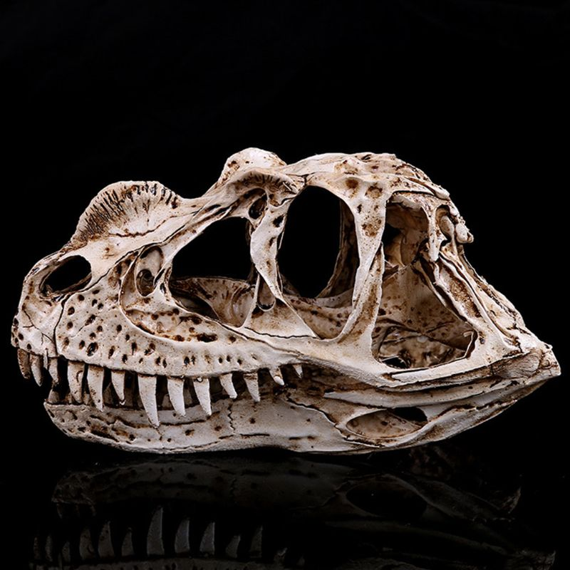 Ceratosaurus Dinosaur Skull Resin Crafts Fossil Skeleton Teaching Model Halloween Home Office Decoration
