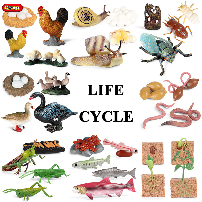 Oenux Новый Животные жизнь рост модели жизненного цикла Гусь насекомых улитки Черепашки-ниндзя фигурки статуэтки детские развивающие симпат...