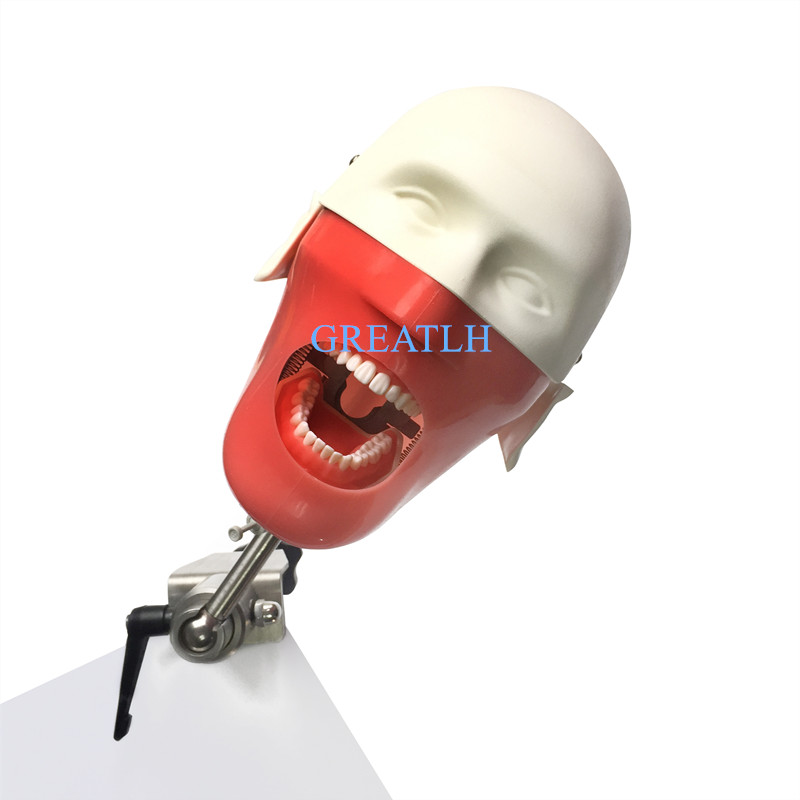 Dental Training Phantom Head Simulation Teeth Model Dentist Education Practice Head Model Dental Teaching Model