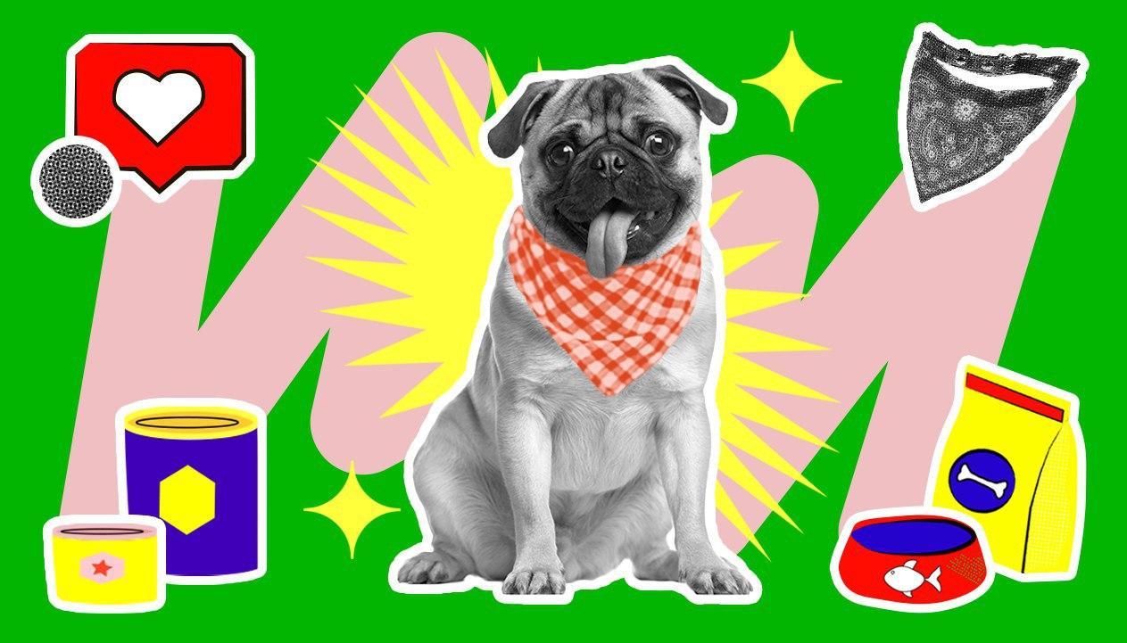 Как продавать товары для животных на AliExpress: опыт марок Rachel Wow и «Не один дома»