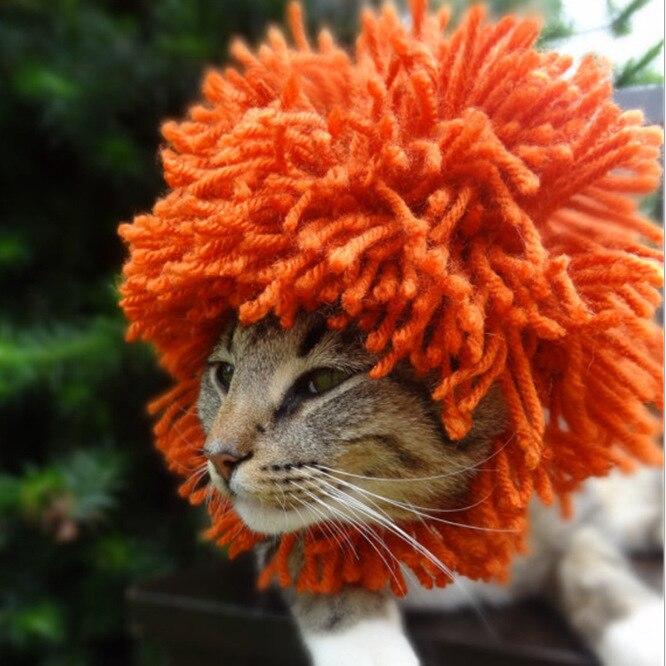 фото кота в шапке льва дети отгадывают