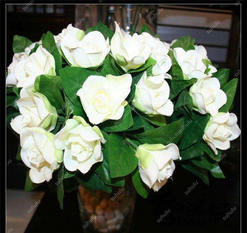 Rare Gardenia Bonsai(Cape Jasmine) Amazing Smell & Beautiful Flower Bonsai Tree Potted For Home Garden Plant 100 Pcs/Bag Potted